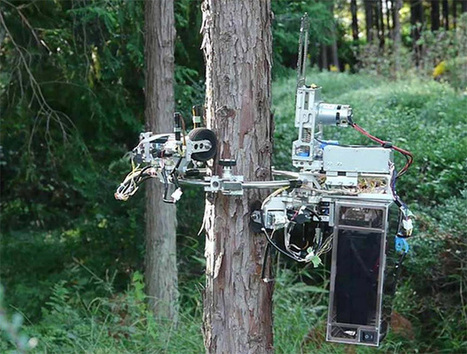 No Tree Is Safe From This Chainsaw-Wielding Robot - IEEE Spectrum | machinelike | Scoop.it