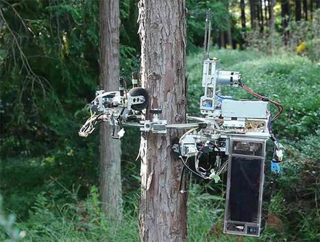 No Tree Is Safe From This Chainsaw-Wielding Robot - IEEE Spectrum | Cloud Robotics RO-BOTICA | Scoop.it