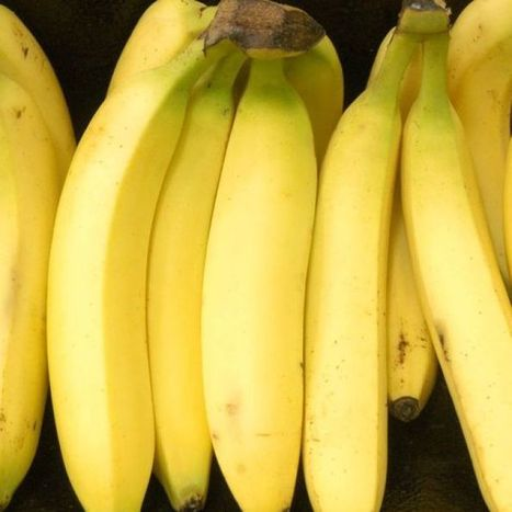 GM bananas to aid fight against African vitamin A deficit | Adverse Health Effects of Genetically Engineered Foods | Scoop.it