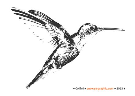 Hummingbird (colibri) : le nouvel algorithme de Google va-t-il changer le monde du seo ? | Référencement - Conseils d'optimisation SEO Pole Position Seo | Scoop.it
