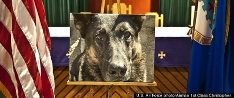 Remembering The Dogs Of War | Dogs and People | Scoop.it