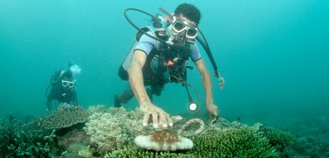 "The Sea Cucumber's Vanishing Act | Hakai Magazine (""nothing can survive man's over-exploitation"") 