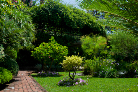 Want to Have a Well-Maintained and Gorgeous Tree Garden?   Professional Lawn & Tree Service   Scoop.it