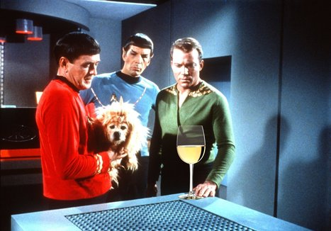 William Shatner Names His Favorite Wines - Daily Beast | Quirky wine & spirit articles from VINGLISH | Scoop.it