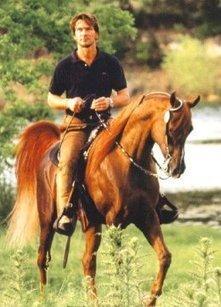 Patrick Swayze - StraightEgyptians.com - Arabian Horse Online - Arabische Pferde Online | ZL patrick swayze | Scoop.it