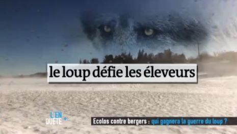 Ecolos contre Bergers - Qui gagnera la guerre du loup ? | pastoralisme et prédation | Scoop.it