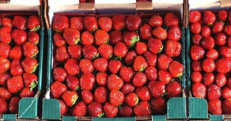 Tarte aux fraises revisitée - Essor | Cuisine et cuisiniers | Scoop.it