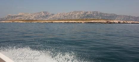 Sites de plongée de Marseille, de la Côte-Bleue à la Ciotat - Le Blog de la Plongée Bio | Dans mon sac de plouf | Scoop.it