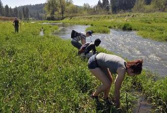 Lands Council, STCU, students team up on watershed restoration - The Spokesman Review | Fish Habitat | Scoop.it