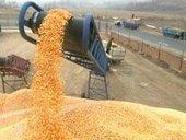 Importations de blé : recul de près de 30% les 10 premiers mois ... | impotation des céréale | Scoop.it