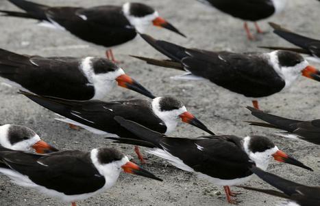 Florida to create new bird sanctuaries | Oceans and Wildlife | Scoop.it