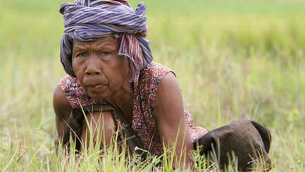 Le sucre du Cambodge vire à l'amer pour les paysans expropriés | Questions de développement ... | Scoop.it