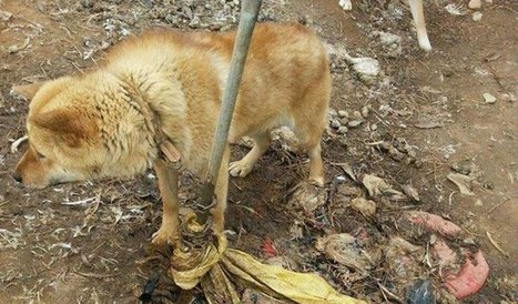 Transformation of Terrified Dog Rescued From Meat Farm Will Give You Hope | Nature Animals humankind | Scoop.it