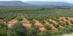 El olivar ecológico: ¿Qué es la agricultura ecológica? | El Catador de Aceite | Ecología y Sostenibilidad | Scoop.it