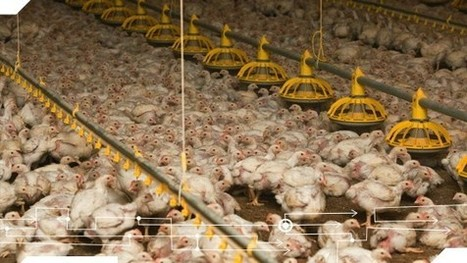 Antibiotika in der Tierzucht - Substanzlose Statistik | Agrarforschung | Scoop.it