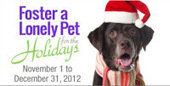 Bunny's Blog: Foster a Lonely Pet for the Holidays 2012 | Pet News | Scoop.it