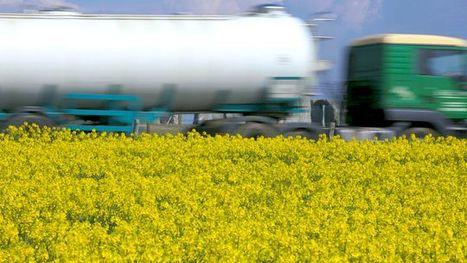 Energiewende: Stoppt den Bioenergie-Wahnsinn | The P2P Daily | Scoop.it
