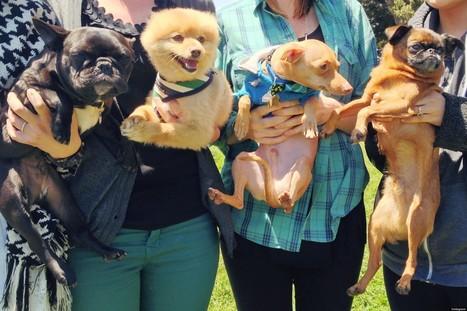 Instagram Celebrity Dogs, Tuna, Biggie, Trotter and Dagger, Instameet In San ... - Huffington Post | dogs | Scoop.it