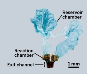 Beetle's Explosive Spray Mechanism Revealed By X-Ray Imaging | Chemical & Engineering News | CALS in the News | Scoop.it