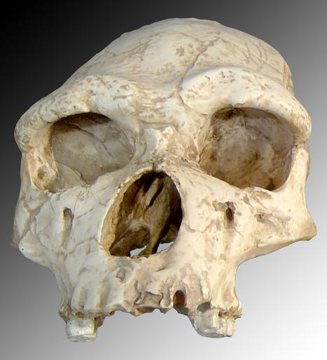 Grotte de Tautavel : découverte de nouveaux trésors laissés par nos ancêtres cannibales | Think outside the Box | Scoop.it