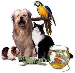 7 Ways Pets Improve Your Health | Dogs | Scoop.it
