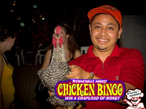 Chicken Bingo at Mr. Greedy's | Top tips casino winner don't want to share | Scoop.it