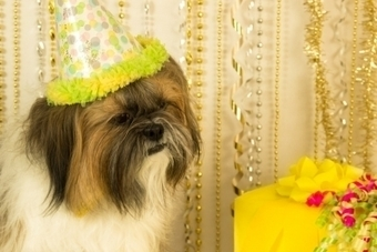 Five Unique Dog Birthday Gift Ideas | Pets | Scoop.it
