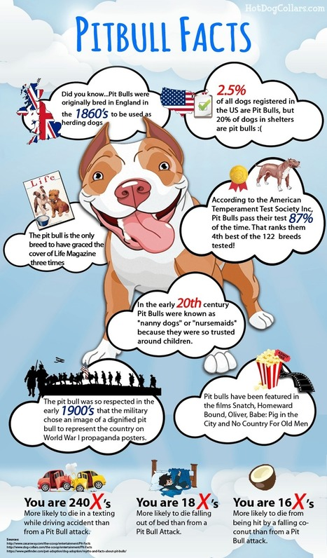 Facts About Pit Bulls That You May Not Know | HotDogCollars.com | Going Green | Scoop.it