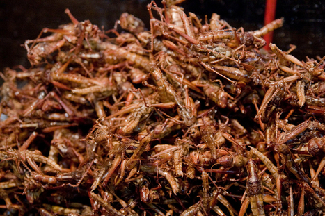 Exploring the Ethics Behind American Insect Farms for Human Consumption | Entomophagy: Edible Insects and the Future of Food | Scoop.it