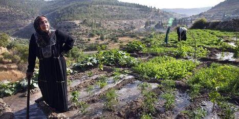 L'ONU condamne les destructions de maisons palestiniennes par Israël | Intervalles | Scoop.it