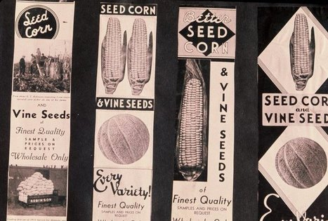 Big Seed: How The Industry Turned From Small-Town Firms To Global Giants | Year 9 Geography | Scoop.it