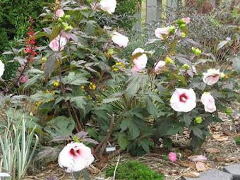 Plantas y Flores - todo sobre jardinería y jardines: Cómo crecer ...   Fp Agraria   Scoop.it