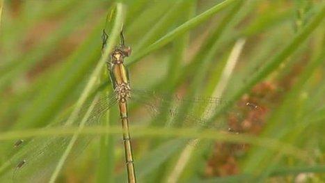 A la decouverte des papillons et libellules, espèces protegées du parc naturel régional des Landes de Gascogne - France 3 Aquitaine | Ecotourisme Landes de Gascogne | Scoop.it
