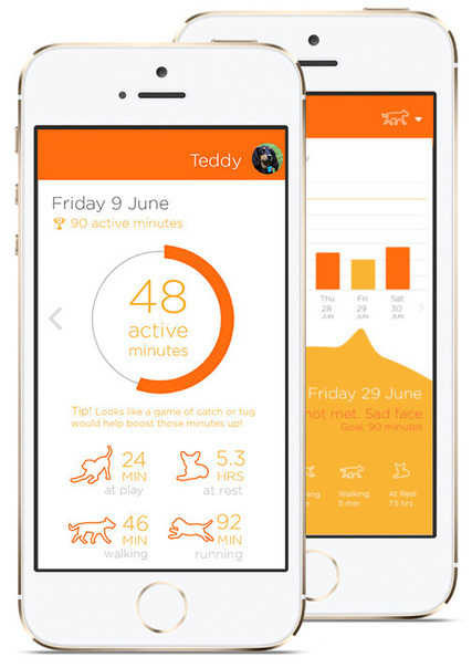 PitPat builds a dog activity tracker for the U.K. that goes one year on a single charge | Digitized Health | Scoop.it
