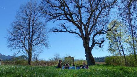 Dans la Drôme, cette école participative forme les jeunes générations à l'écologie | Communication non-violente et pédagogie active | Scoop.it