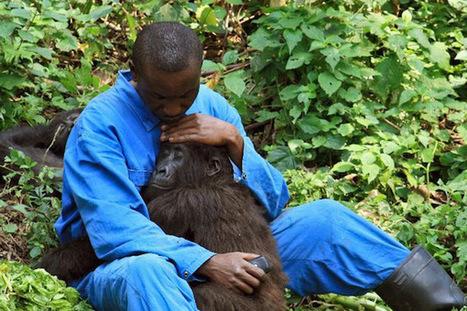 Oil Explorers: Keep your Hands off Virunga, Africa's Oldest National Park | Bees | Scoop.it