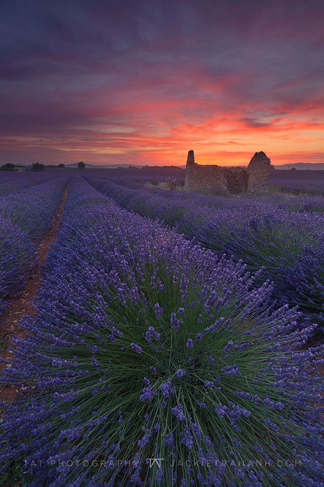 Magic Hour in Valensole by Jackie Tran | My Photo | Scoop.it