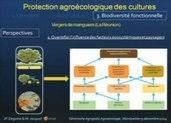 Vidéo du séminaire du cycle Agroécologie Montpellier du 2014-12-09 : Protection agroécologique des cultures : principes, application sur le terrain, impact sur la biodiversité fonctionnelle- Agropo... | agroecologie | Scoop.it
