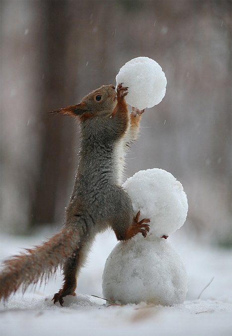 Two Adorable Squirrels Take Photos, Play Catch, and Build a Snowman | The Blog's Revue by OlivierSC | Scoop.it
