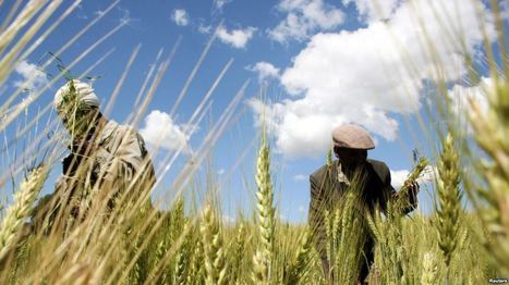 Sécurité alimentaire: l'Afrique doit se doter d'une gouvernance foncière pour protéger ses terres | Nature to Share | Scoop.it