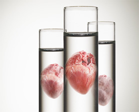 Complex Body Parts Could Soon Be Lab-Grown | You Can't Make This Stuff Up | Scoop.it