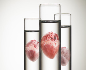 Complex Body Parts Could Soon Be Lab-Grown : Discovery News   The future of medicine and health   Scoop.it