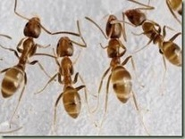 Ants! Ants! Ants! - Backyard Wisdom | Good Gardening News and Advice | Scoop.it