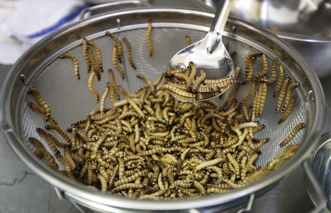 Can insects go from pests to popular snack foods? | Entomophagy: Edible Insects and the Future of Food | Scoop.it