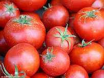 Breast Cancer Risk May Be Lowered with Diet Rich in Tomatoes, Says Rutgers Researcher | Media Relations | Health Fitness & Inspiration | Scoop.it