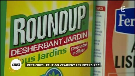 Vidéo - La Quotidienne  - Pesticides : peut-on vraiment les interdire ? - 12-04-2016   OGM, Pesticides, Les alternatives et les problèmes de l'agriculture chimique   Scoop.it