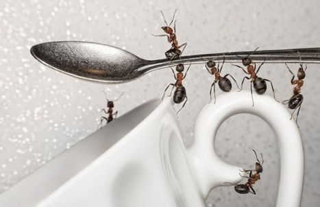 7 Steps to get rid of ants | Lifestyle and Health tips | Scoop.it