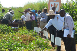 Farming Africa offers free VIP-passes - Farming Africa | Farming-Africa | Scoop.it