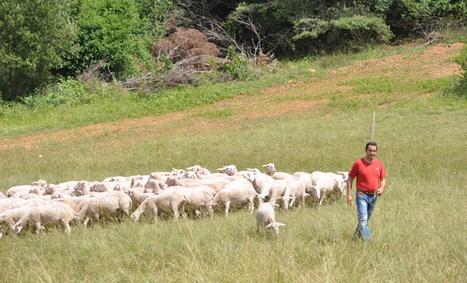 Un festival pour valoriser l'élevage et les filières à Proissans | Agriculture en Dordogne | Scoop.it