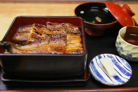 Les Japonais sont interdits de consommation d'anguilles | Japan Tsunami | Scoop.it